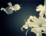 video-abeilles
